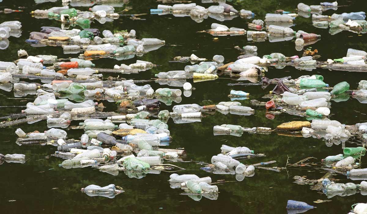 colpaso ambiental declara UNAM